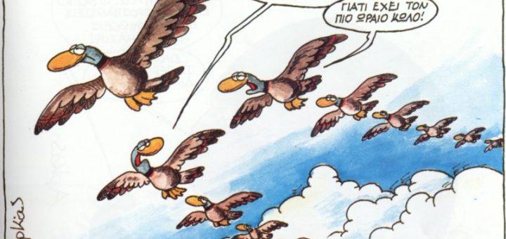 1._Arkas_Birds